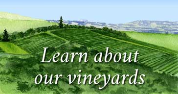 Learn-about-our-vineyards