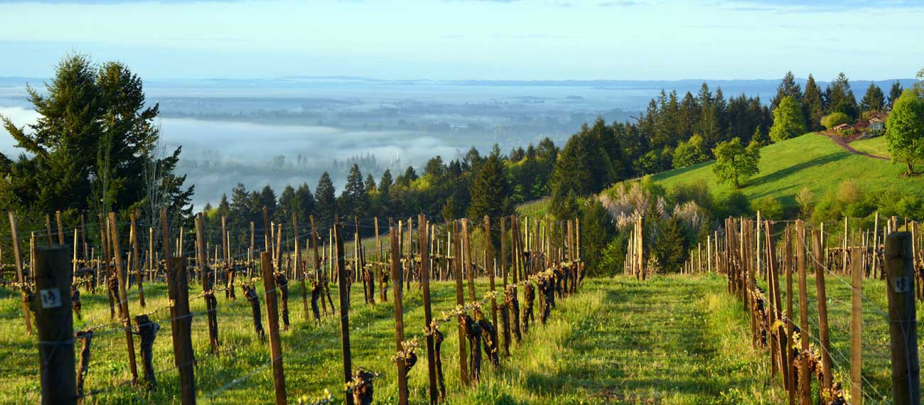 The-Eyrie-Vineyards-in-the-Dundee-Hills